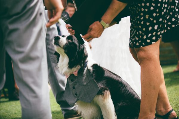 queenstown marriage celebrant wedding dog